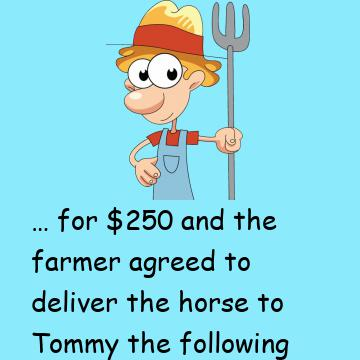 A Young Guy Called Tommy Bought A Horse From A Farmer