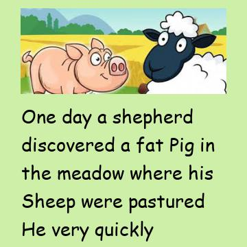 The Pig & The Sheep