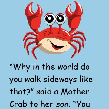 Young Crab & His Mother